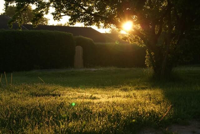 backyard-garden-grass-13975