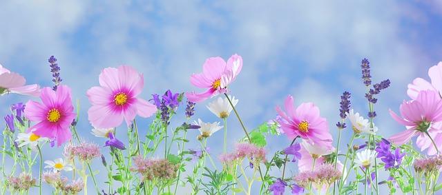 wild-flowers-571940_640